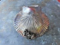 Deep Sea Scallop Door Knocker